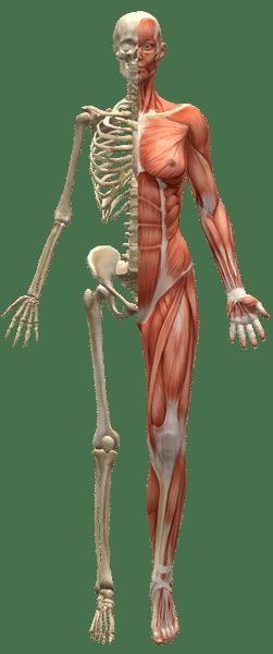 osteopathie tarrazi