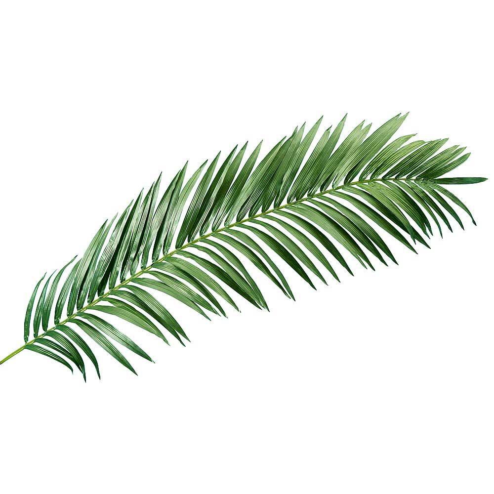 Plante-bolectif